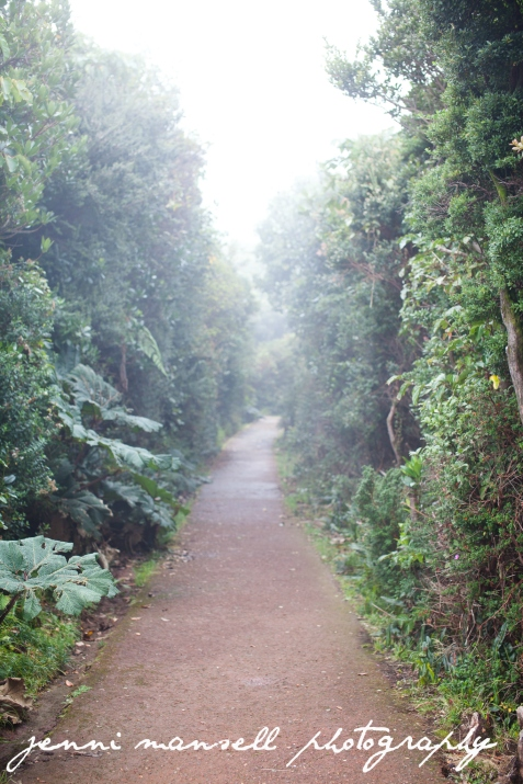 The walk up to the volcano which was sadly covered by clouds the whole time we were up there.  :)