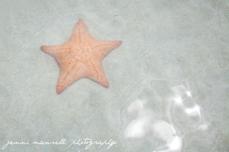 Starfish Beach (Playa de las estrellas) delivered!