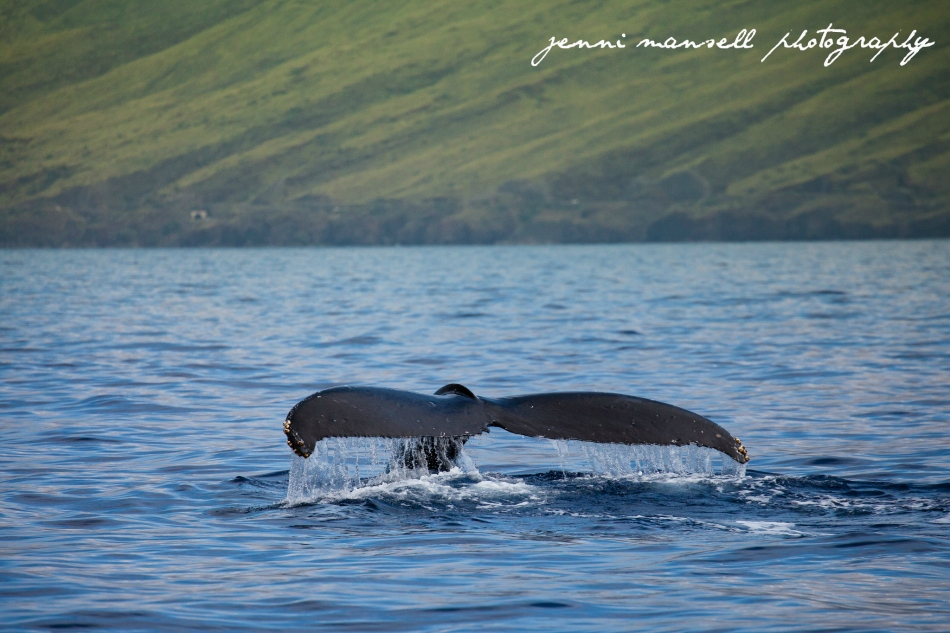 Taken yesterday on a whale watch off the coast of Maui.