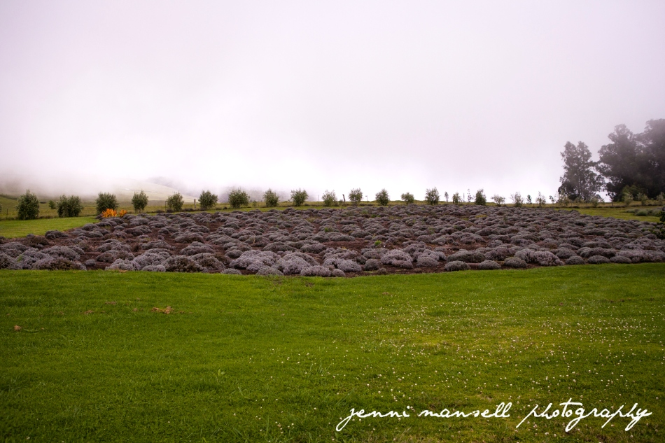 Visiting the Ali`i Kula Lavender Farm as the rain started to come in.