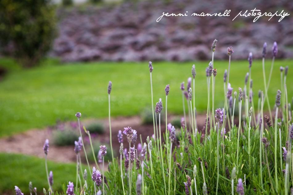 Ali`i Kula Lavender farm