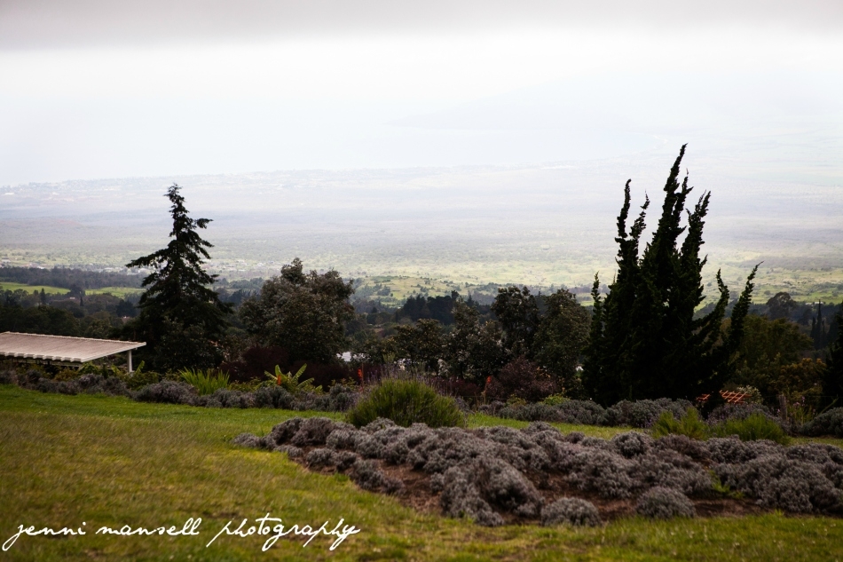 Great view from the Ali`i Kula Lavender Farm