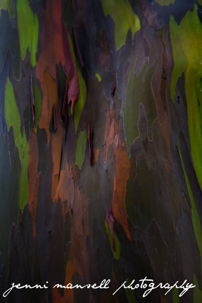 A closeup of the bark