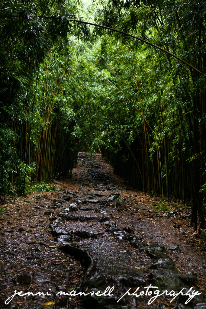 The best pic I could get of the bamboo forest on Pipiwai Trail- if it wasn't for the rain, I'd have some really gorgeous pics from there.