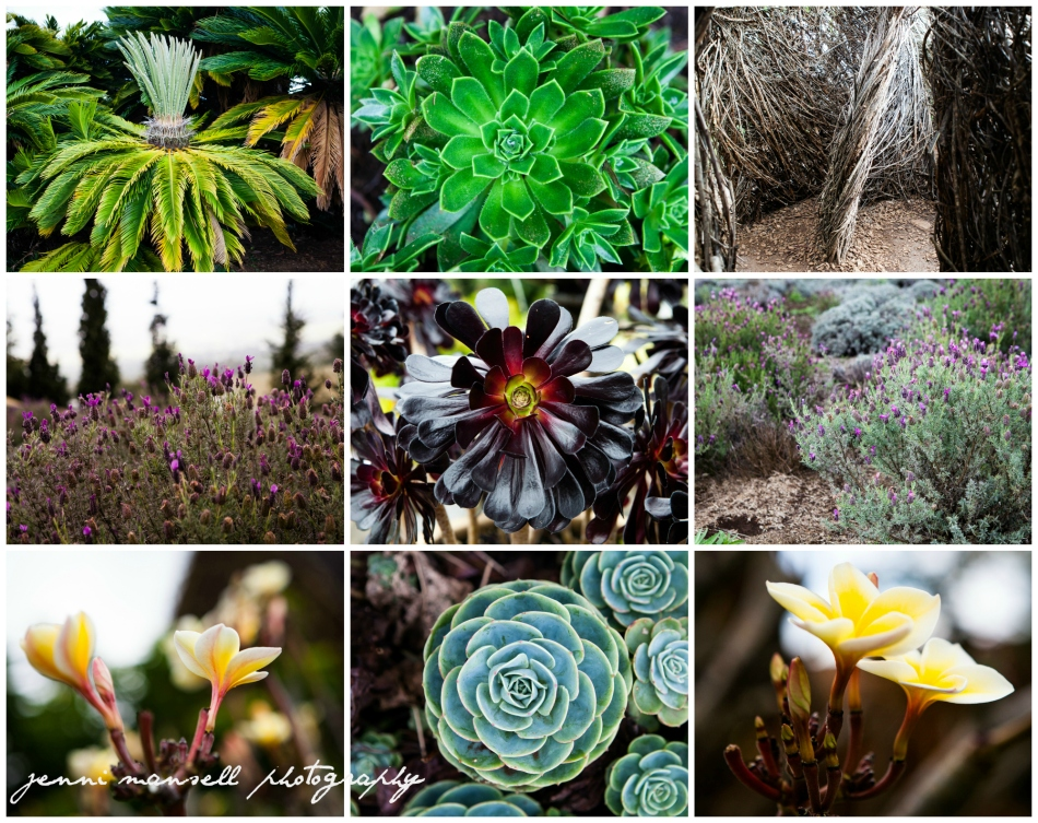 Some of the vegetation around the lavender farm and our next stops on the trip.
