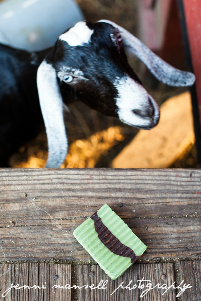 My brother's family makes goat milk soap.  I was taking photos to go on their website and thought it would be cute to try to get some goats in the photos.  Big mistake.  Big.  Huge.  Stay tuned for another blog post detailing that experience.  :)