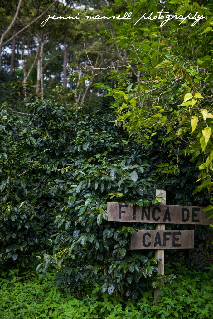 A coffee farm in Honduras, outside of Tegucigalpa.