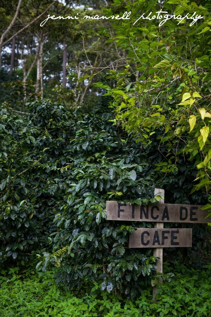 A coffee farm in Honduras, outside of Tegucigalpa.