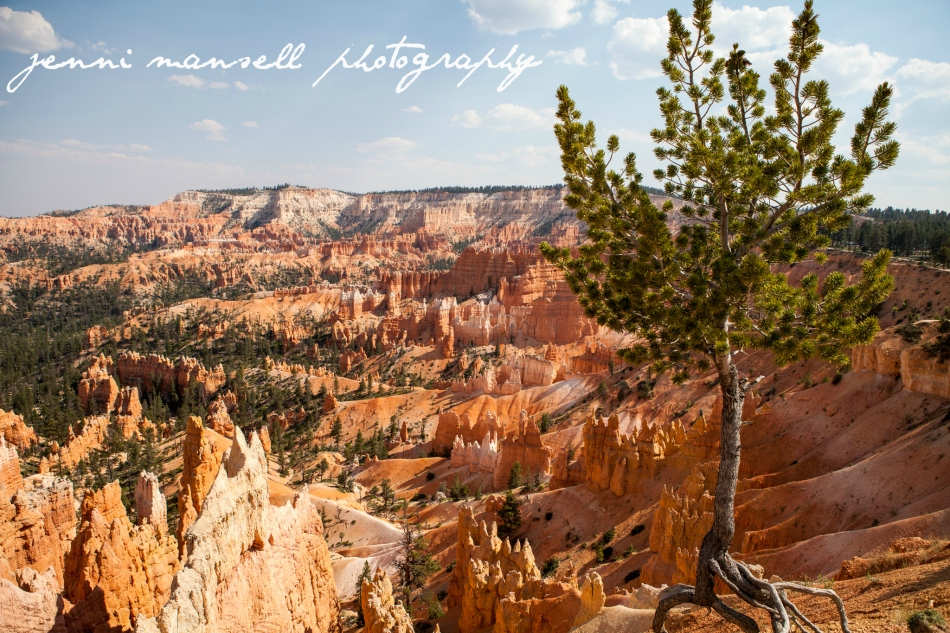 We took our time exploring Utah on the cross-country road trip.  Here is a shot of Bryce Canyon.  More to come soon of Arches, Capitol Reef, Bryce, and Zion National Parks.