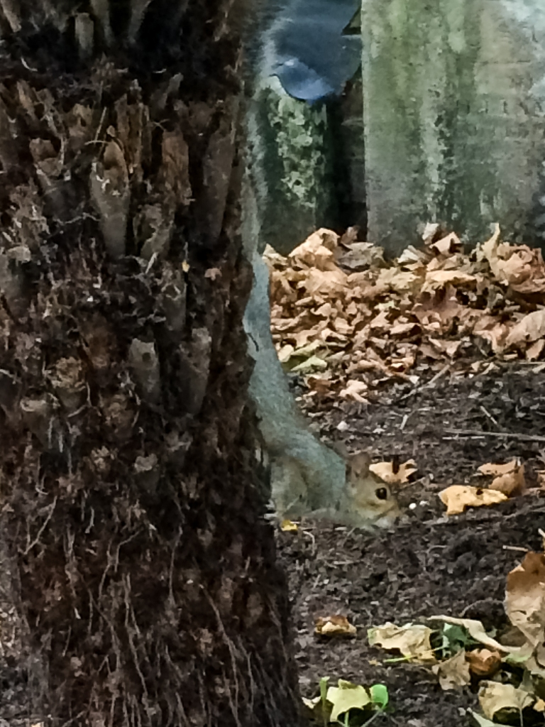 Postman's Park is right next to the church. I had to get a photo of this squirrel. Last spring, my Dad randomly announced
